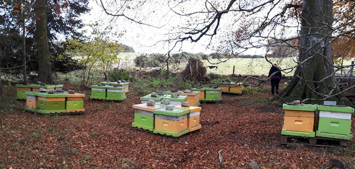 Hives ready for winter