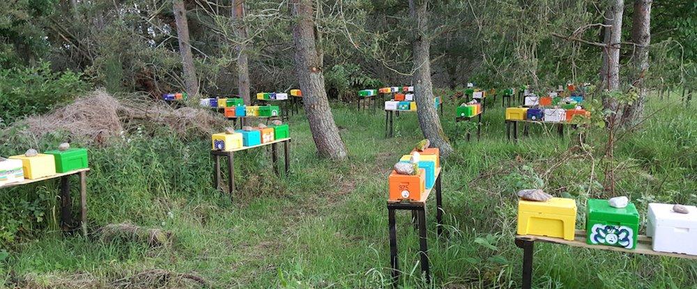 Mating apiary